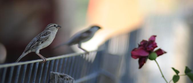 Afghani Bird