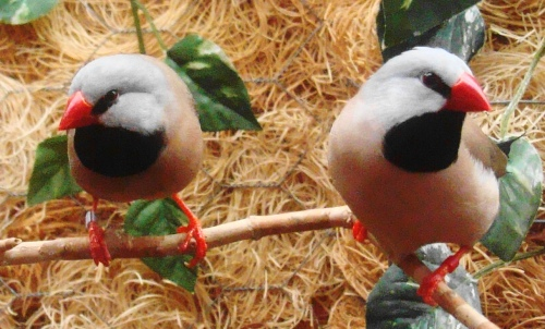 There's a company that sets up and maintains aviaries.  I want one.