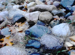 rocks, sand, autumn leaves