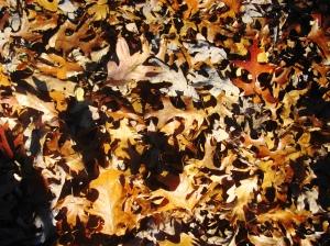 leavesleavesleaves